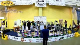 Выставка кошек, Харьков, 03032018, Best show, часть 1
