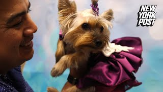 This animal lover is putting the wildest dresses on dogs