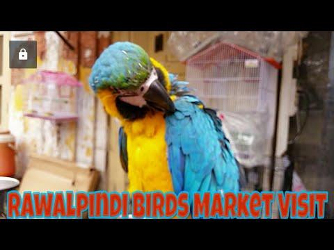 Repeat Pets And Birds Market College Road Rawalpindi