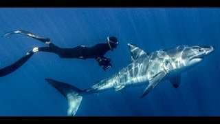 Great White Shark 3D IMAX and Digital Cinema Official Trailer