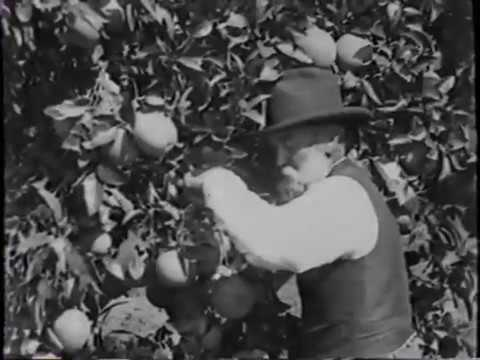 Santa Clara County promotional film (c. 1917) / Things You Ought to Know About San Jose (c. 1920s)