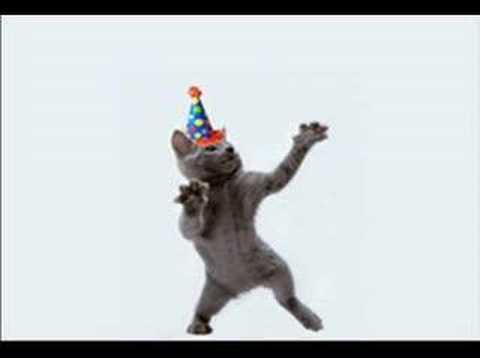 Singing Funny Cat Videos