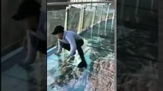3D прикол, со стеклянным туристическим мостом. MyTub.uz