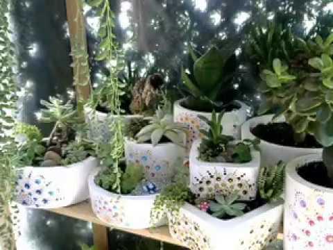 Video 001 cuidados de los mini jardines con suculentas youtube - Cuidado de jardines ...