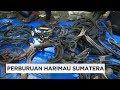 Perburuan Harimau Sumatera