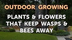 Plants & Flowers That Keep Wasps & Bees Away
