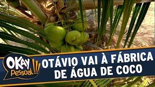 Okay Pessoal!!! - Otávio Mesquita mostra produção de água de coco