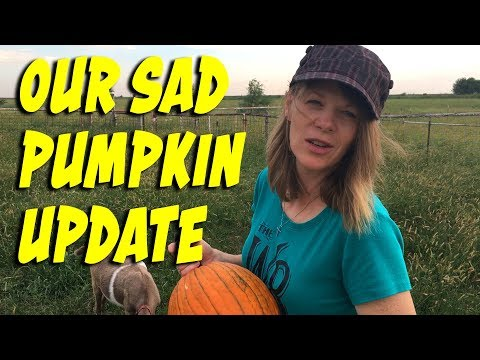 Our Sad Pumpkin Update