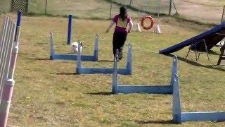 マリア(1歳7か月)ハイスピードの練習。10走目。