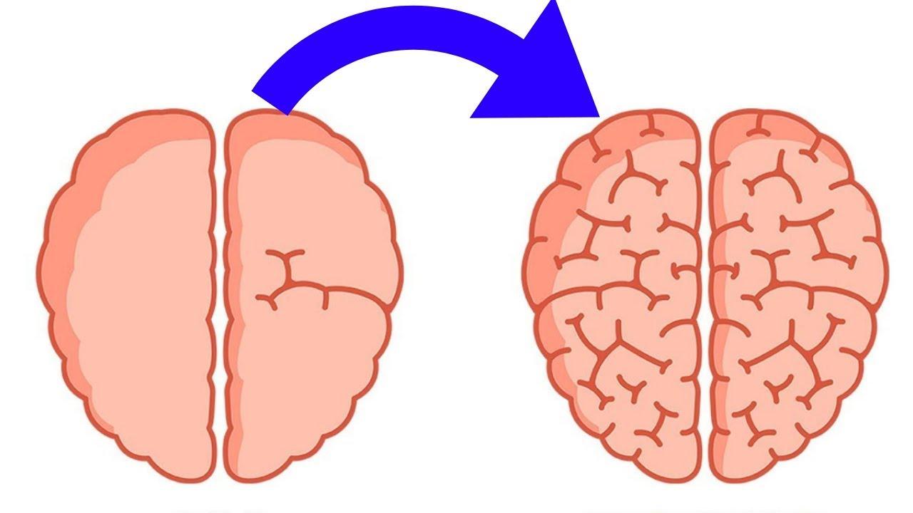 Creierul responsabil de vedere. Neuroștiințe