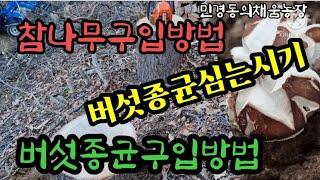 참나무벌목시기 와 표고버섯종균구입