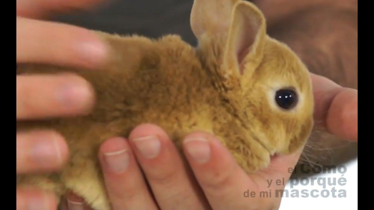 CONEJOS - El conejo Rex - YouTube