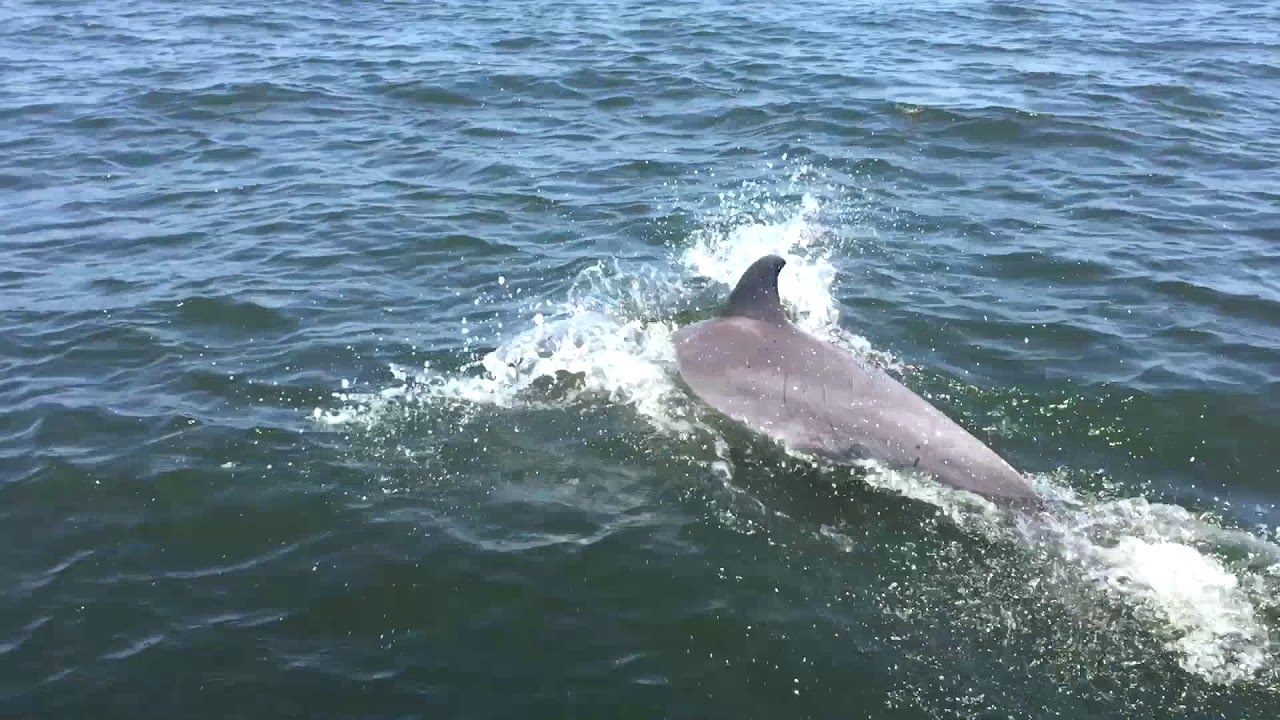 Pax River Maryland >> Huge Pod Of Dolphins In The Patuxent River Maryland Youtube