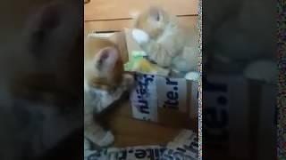 Мои любимые котята (Чистюли-лапушки)
