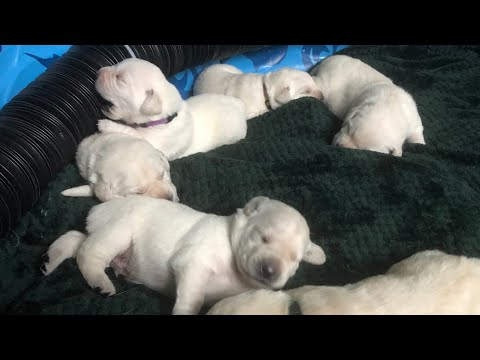LIVE STREAM - Puppy loving afternoon!