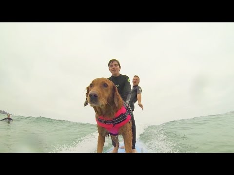 Ricochet the Surf Dog Empowers Kids with Special Needs through Shredding - The Inertia