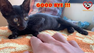 Good Bye Baby Black Kitten, The Kitten was Abandoned on the street Crying. Rescue animals TN center