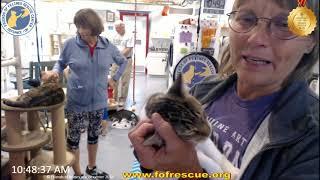 Adoption Of Tinora. 091919    Friends Of Felines Rescue Center Ffrc