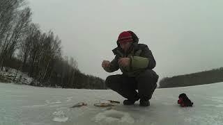 Лёд Соложа и толстые окуни