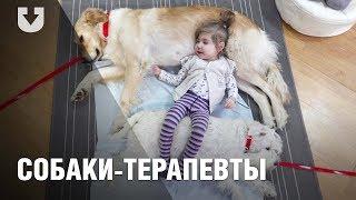 Как собаки помогают лечить детей