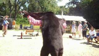 Registered Kansas Kickapoo/ Pottawatomie,doing the SPIRIT OF THE BEAR DANCE,9/3/16