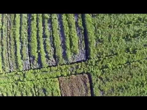 Drone flight over palmoil plantations in Sumatra (Tripa)