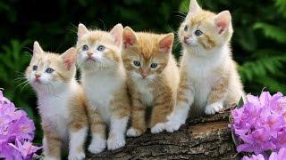 Спасите котят