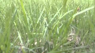 Как сделать красивый газон на даче