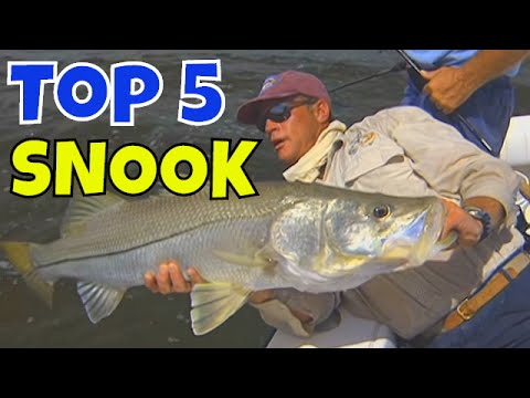 Top 5 Biggest Snook and Best Snook Fishing Lures