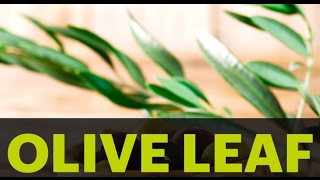 Amazing Health Benefits of Olive Leaf -