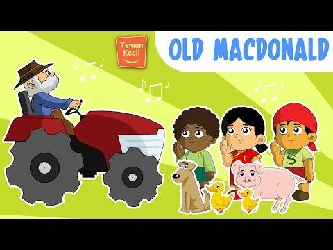 Old MacDonald Had A Farm | Nursery Rhymes | Teman Kecil