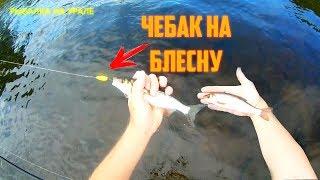 ЧЕБАК(плотва) НА СПИННИНГ в +30.Поклёвки в стиле ОТДАЙ СПИННИНГ. Рыбалка на Урале. Река Каква