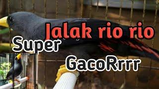 Download Jalak rio rio super gacor Mp3