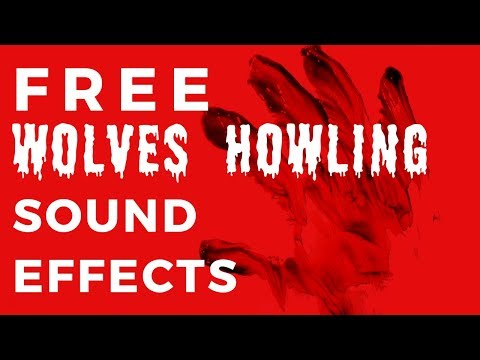 WOLF HOWLING | Free Wolf Sound Effects