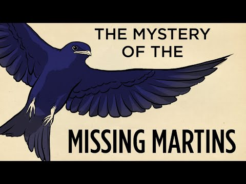 The Mystery Of The Missing Martins   Field Trip!   SKUNK BEAR
