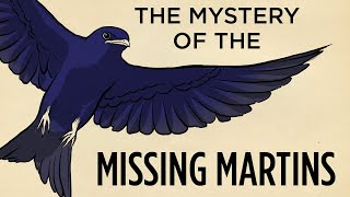 The Mystery Of The Missing Martins | Field Trip! | SKUNK BEAR