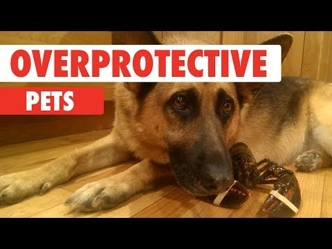 Overprotective Pets | Protecting Babies Kids and Homes Compilation
