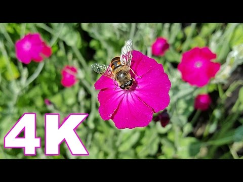 Top 200 Most Beautiful Flowers in The World 💕 4K Video (2017)