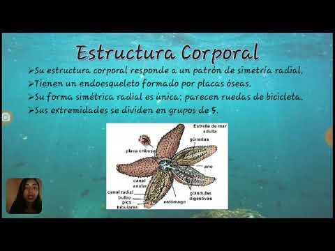 Equinodermos Zoología General
