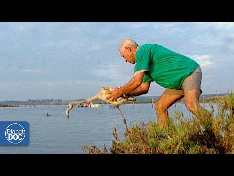 Ebro River Delta. Full Documentary