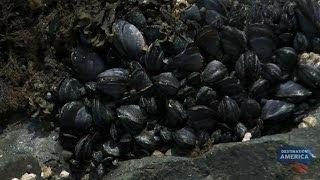 Alaskan Oyster Farming | Buying Alaska