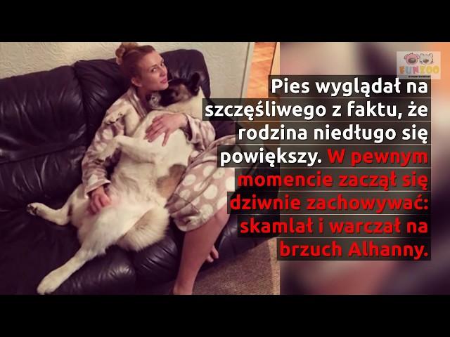 Pies warczał na brzuch ciężarnej kobiety