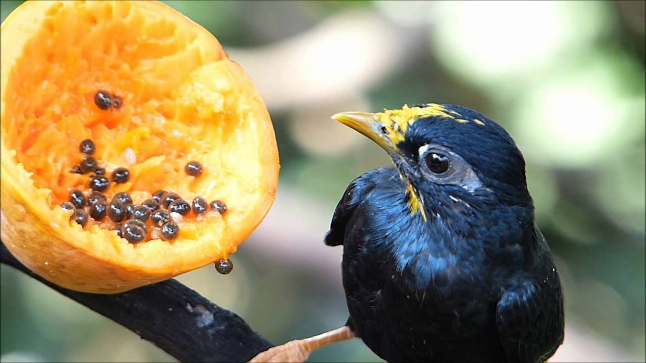 Image result for Edward Youde Bird Aviary