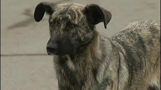 В Красноярске продолжают убивать бездомных собак