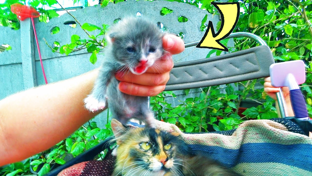 Кошка Аза привела двоих котят! Кошка сделала нам сюрприз ...