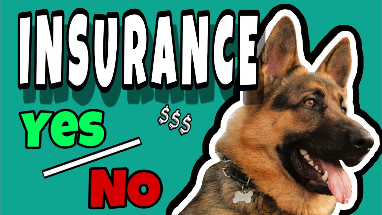 Pet Insurance - Is It Worth It?   Hip Dysplasia Dog - YouTube