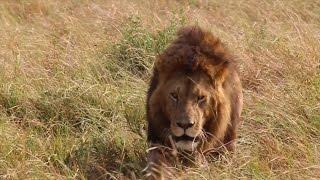 Masai Mara Highlights