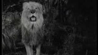tiger vs lion tiger wins
