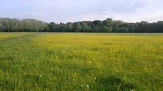 Ein Video, aufgenommen mit dem Google Nexus S