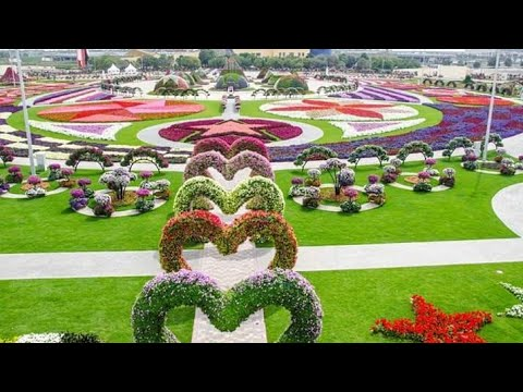 Dubai Miracle garden ..Live from Dubai